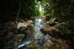 迁徙在酸值Phangan的密林 库存照片