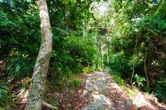 迁徙在Tioman海岛上的密林 免版税库存图片