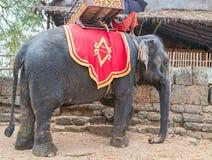 迁徙柬埔寨王国的大象密林 库存图片