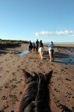 迁徙海滩的小马 免版税库存图片