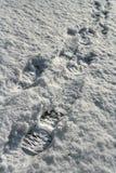 迁徙的起动脚印在雪的被日光照射了在下午冬天太阳之前 库存照片