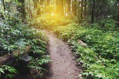 迁徙的足迹在热带雨密林森林里 库存照片