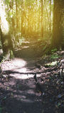 迁徙的足迹在热带雨密林森林里 免版税图库摄影
