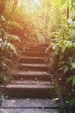 迁徙的足迹在热带雨密林森林里 库存图片
