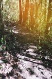 迁徙的足迹在热带雨密林森林里 免版税库存照片