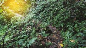 迁徙的足迹在热带雨密林森林里 图库摄影