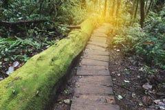 迁徙的足迹在热带雨密林森林里 免版税库存图片
