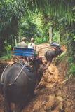 迁徙通过密林的大象在北泰国 图库摄影