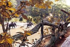 迁徙通过密林的大象在泰国 免版税库存图片