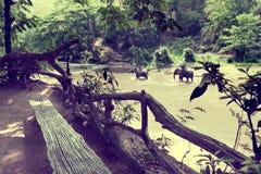 迁徙通过密林的大象在泰国 库存照片