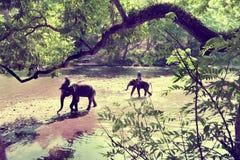 迁徙通过密林的大象在泰国 免版税库存照片