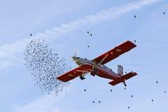 迁徙鸟在秋天的机场是复发的危险对空中交通 免版税库存照片