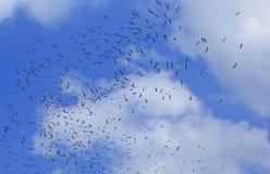 迁徙鸟 库存图片