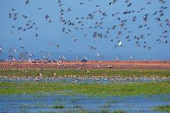 迁移的鸟 免版税图库摄影