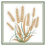 迅速地扩展的麦子-商标 库存照片