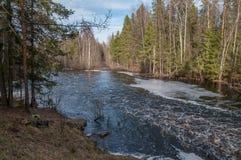 迅速河在森林里 库存图片