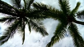 迅速移动在与白色云彩的美丽的棕榈树 股票视频
