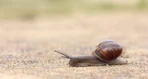 迅速移动蜗牛 库存图片