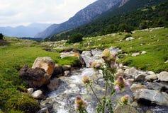 迅速跑的溪在吉尔吉斯阿塔岛国立公园,吉尔吉斯斯坦 免版税库存图片