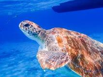 过来为空的库拉索岛景色的乌龟 库存图片