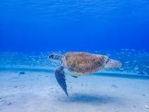 过来潜航与乌龟和鱼的空气的 图库摄影