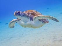 过来潜航与乌龟的空气的 免版税图库摄影