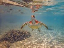 过来潜航有乌龟库拉索岛景色的空气的 库存图片