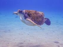 过来潜航有乌龟库拉索岛景色的空气的 库存照片