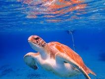 过来潜航有乌龟库拉索岛景色的空气的 免版税库存照片