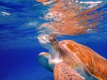 过来潜航有乌龟库拉索岛景色的空气的 免版税库存图片