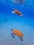 过来潜航有2乌龟库拉索岛景色的空气的 免版税库存照片