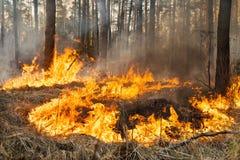过程中的森林火灾 免版税库存图片
