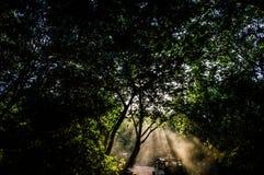 过滤树的阳光的Komorebi日语如被看见在一个徒步旅行队期间在Minneriya国家公园 图库摄影