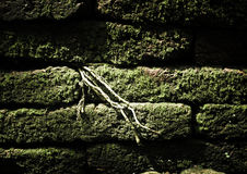 过滤:与绿色青苔和树根的砖石头生长betwee 免版税图库摄影