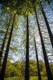 迈泽植物园 免版税图库摄影
