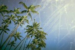 年迈的和被佩带的棕榈树 免版税图库摄影