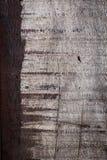 年迈的抽象木头风化了概略的五谷表面纹理 免版税库存图片