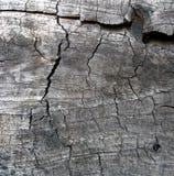 年迈的木头2 免版税库存照片