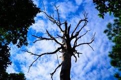年迈的死的木头 库存照片