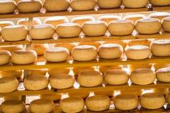 年迈的绵羊乳酪 免版税库存照片