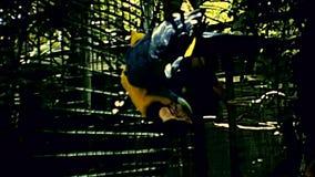 迈阿密公园鹦鹉 股票视频
