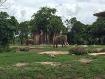 迈阿密动物园 免版税图库摄影
