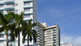 迈阿密大厦和棕榈树 影视素材