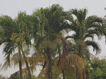 迈阿密天气棕榈树 免版税库存照片