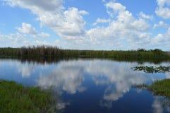 迈阿密沼泽地风景 免版税库存照片