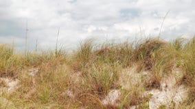 迈阿密海滩自然录影 股票视频