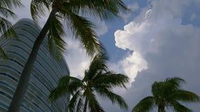 迈阿密海滩太阳云彩天空棕榈树4k佛罗里达美国 股票录像
