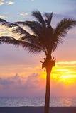 迈阿密海滩,佛罗里达五颜六色的夏天日出或日落与棕榈树 免版税库存图片