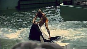 迈阿密虎鲸展示 影视素材