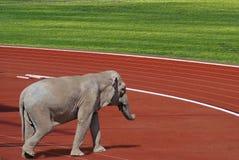 运作体育运动 免版税库存照片